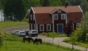 Nergårdenhästar